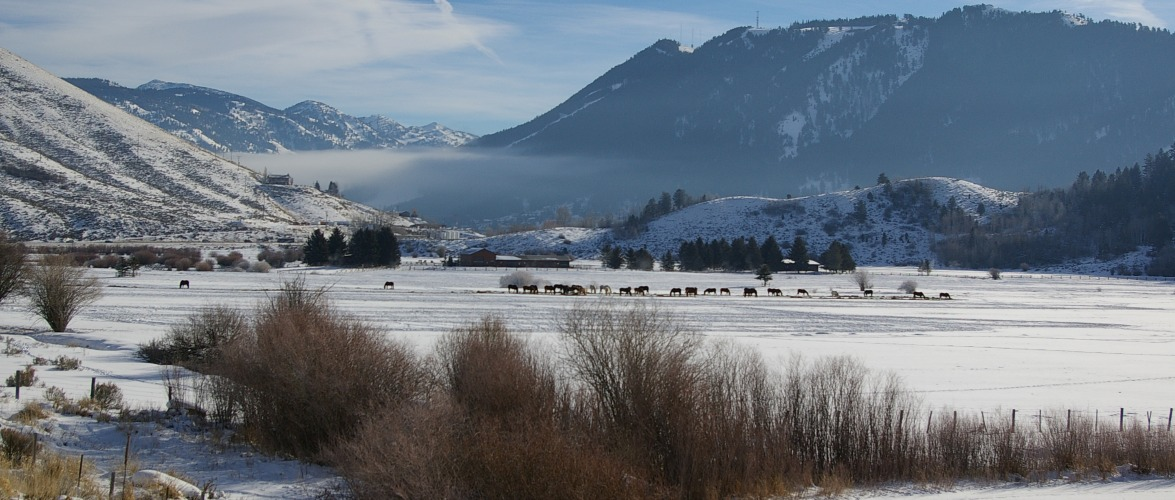 Teton County Horses